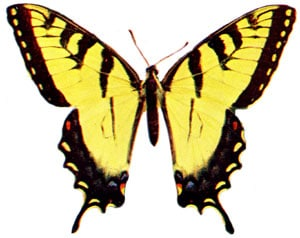 http://karenswhimsy.com/pictures-of-butterflies.shtm