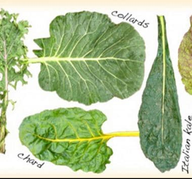 http://thehealthmoderator.com/vitamin-k-lutein-folate-and-beta-carotene-help-keep-brain-healthy-say-researchers/