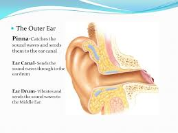 A constant diameter cylindrical ear canal.  Figure courtesy of www.slideplayer.com