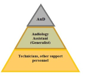 Hierarchy of personnel in the audiology clinic.
