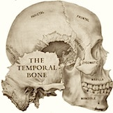 Figure 1.  Bones of the skull.  The ear canal is housed in the temporal bone.