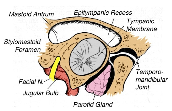 Figure 5.     Adjoining structures/areas to the external auditory meatus (right ear), as viewed from the aperture of the ear canal toward the tympanic membrane.