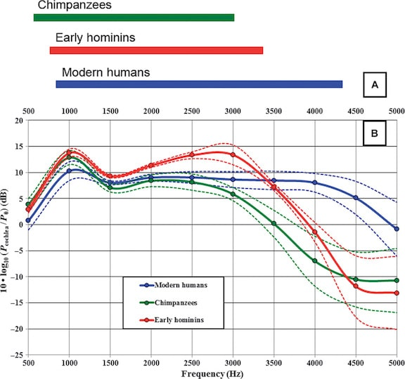 Figure 2. Model results for chimpanzees, modern humans, and early hominins from 0.5 to 5.0 kHz. (A) The occupied band is similar in chimpanzees and early hominins, but is shifted toward slightly higher frequencies in the latter. Modern humans show a widened occupied band that is further extended toward higher frequencies. (B) The sound power transmission curves correspond to decibels at the entrance to the cochlea relative to P0 = 10−18 W for an incident plane wave intensity of 10−12 W/m2. The mean value ± 1.0 (Quam, et. al., 2015).