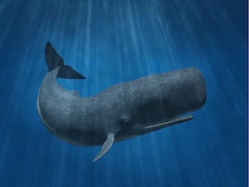 Figure 8. The loudest water-borne creature is the sperm whale at 230 dB. Stock photo.